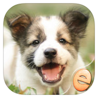 Jigsaw Wonder Puppies Puzzles